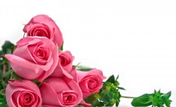 White Wallpaper with Pink Roses
