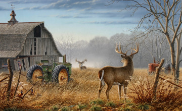 Whitetail Deer HD Wallpaper