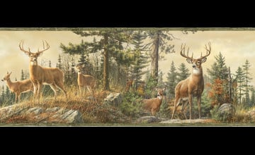 Whitetail Deer Wallpaper Borders