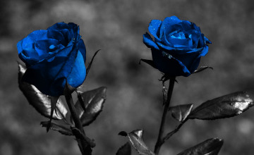 Widescreen Desktop Wallpaper Dark Flower