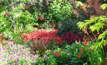 Widescreen Flower Garden Wallpapers
