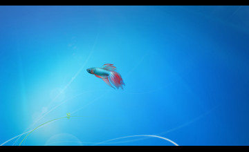 Windows 7 Fish Wallpaper