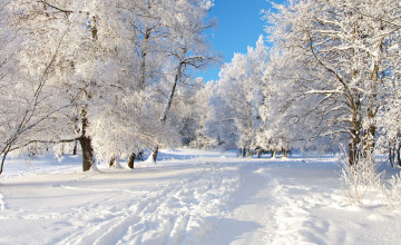 Winter Backgrounds Wallpaper