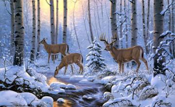 Winter Deer Wallpaper Backgrounds
