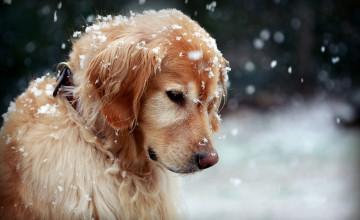 Winter Pet Wallpaper