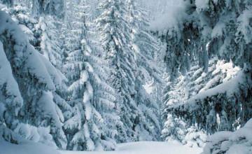 Winter Scene Wallpaper Free