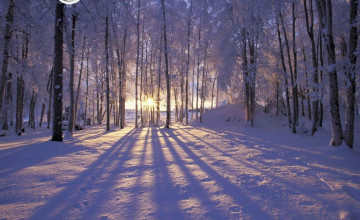 Winter Scenes For Wallpaper Free