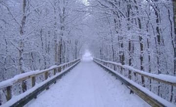 Winter Wallpaper Screensaver Free