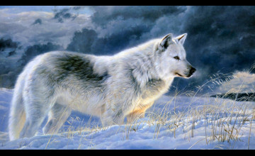 Wolf Animal Wallpapers