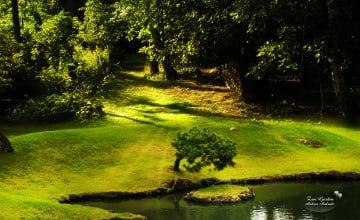 Zen Garden Wallpaper